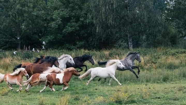 chevaux en liberté